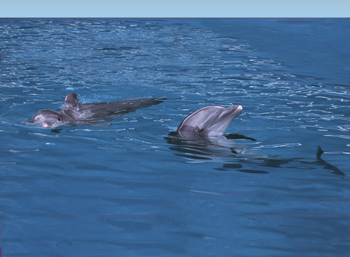 Dolphin Excursion Tour